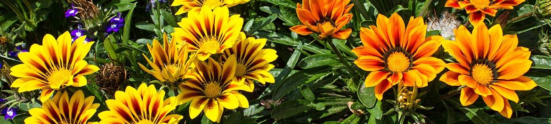 fleurs qui resistent a la chaleur