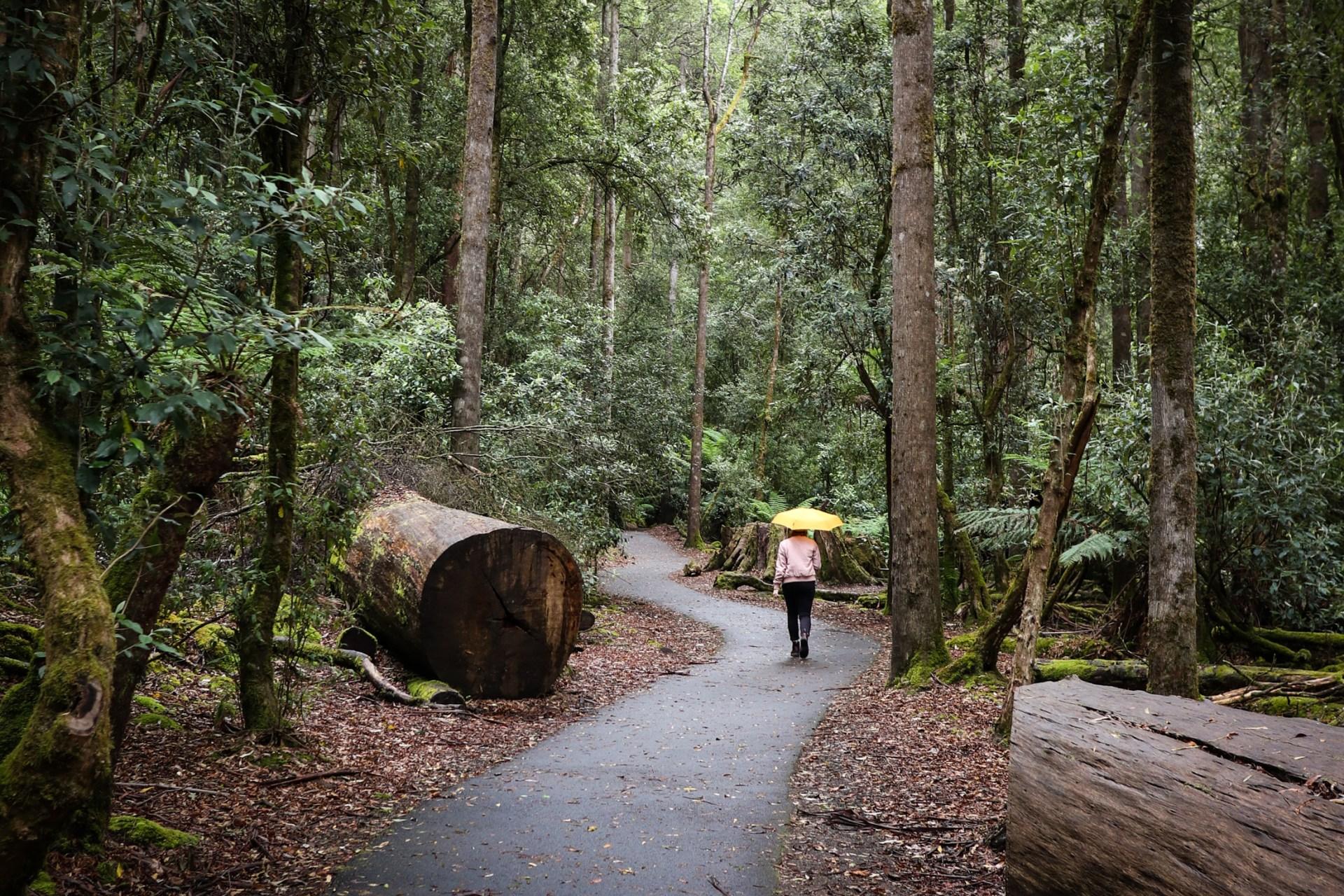 Russell Falls track at Mt. Field National Park in Tasmania