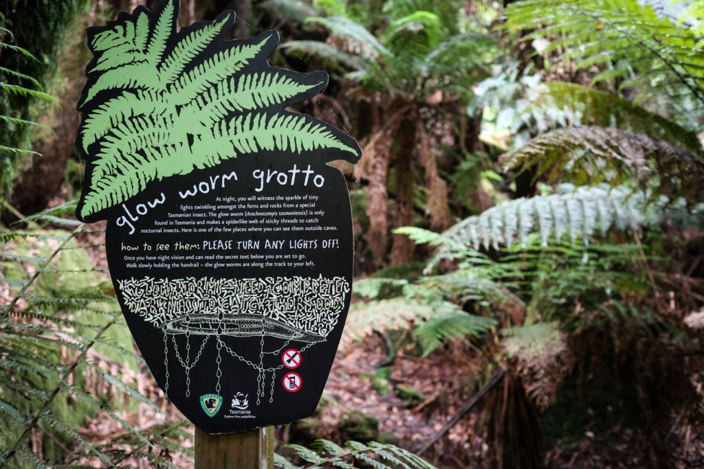 Glow worm grotto along the Russell Falls track at Mt. Field National Park in Tasmania