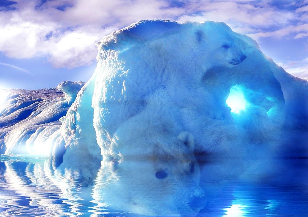 Affiche double exposition représentant un ours dans son milieu naturel