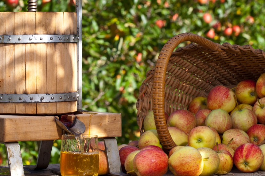 Some Apple gets squeezed to a fresh Apple Juice. Some Apple Trees are behind it.