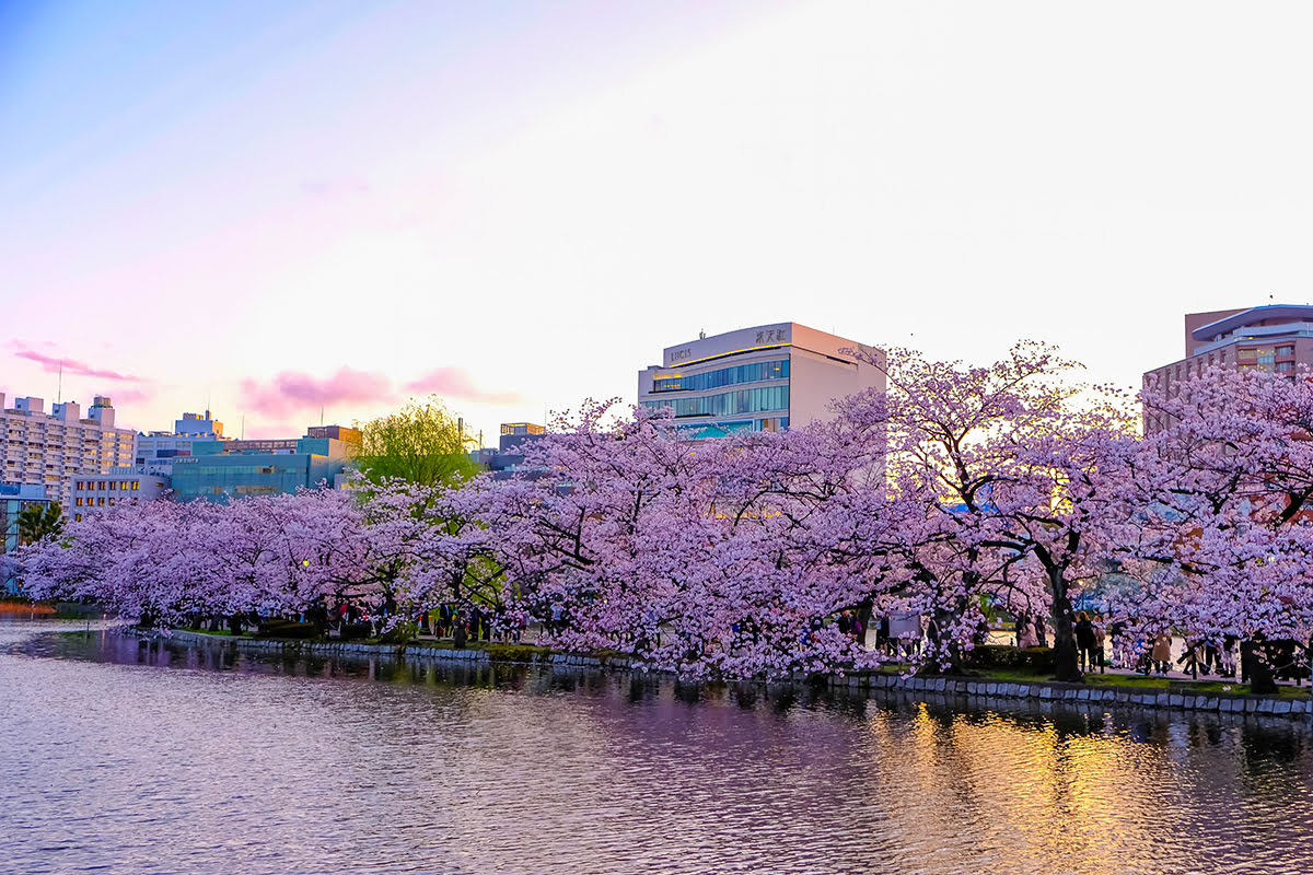 Travel Japan: Best Time to Visit Tokyo Throughout the Year