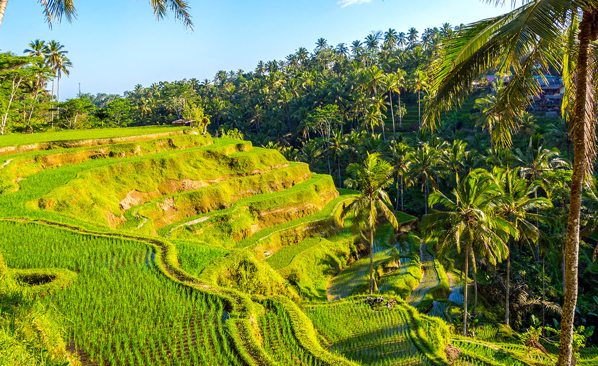 Wilderness hotels-resorts-accommodations-Tegalalang Rice Terrace