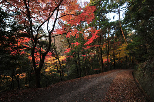 Autumn in Nara-Nara city