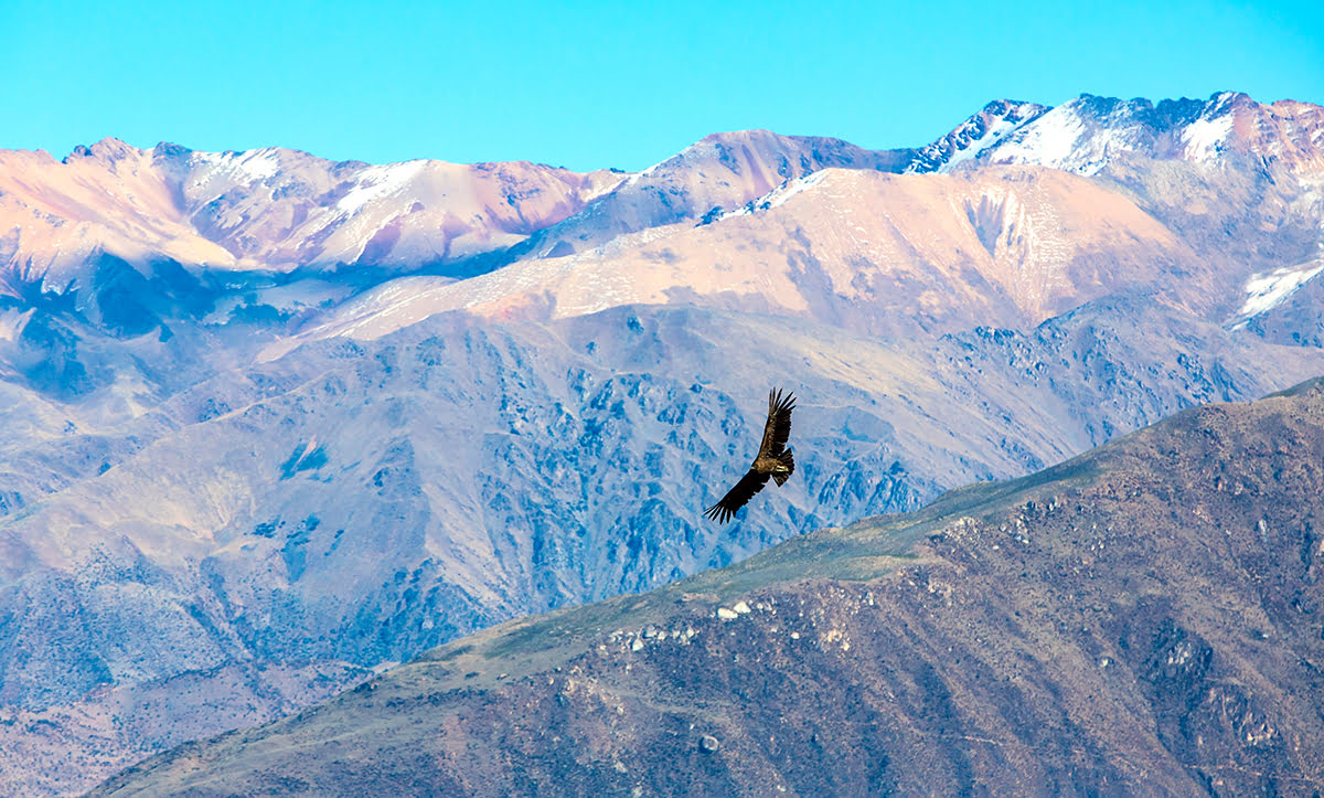 Hiking in Peru-treks-Colca Canyon