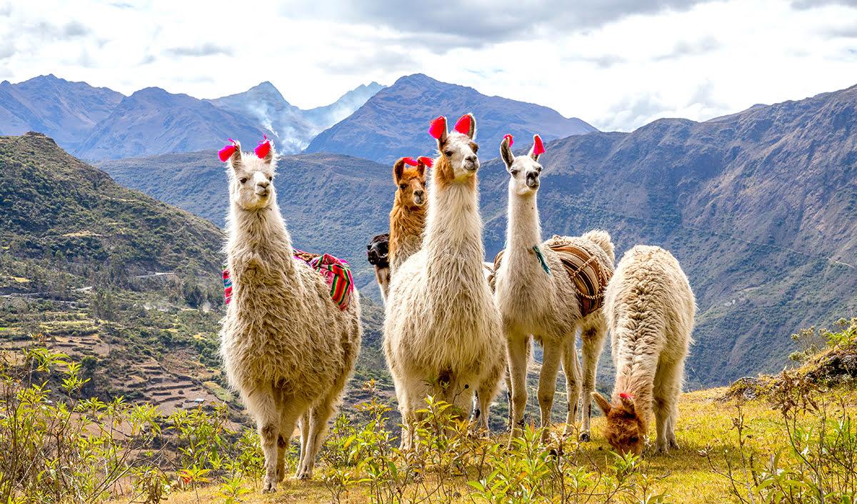 Hiking in Peru-treks-Inca Trail