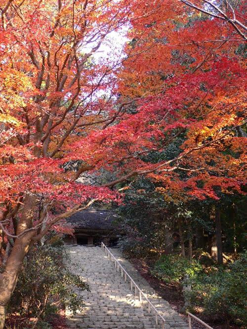 Autumn in Nara-Murouji Temple