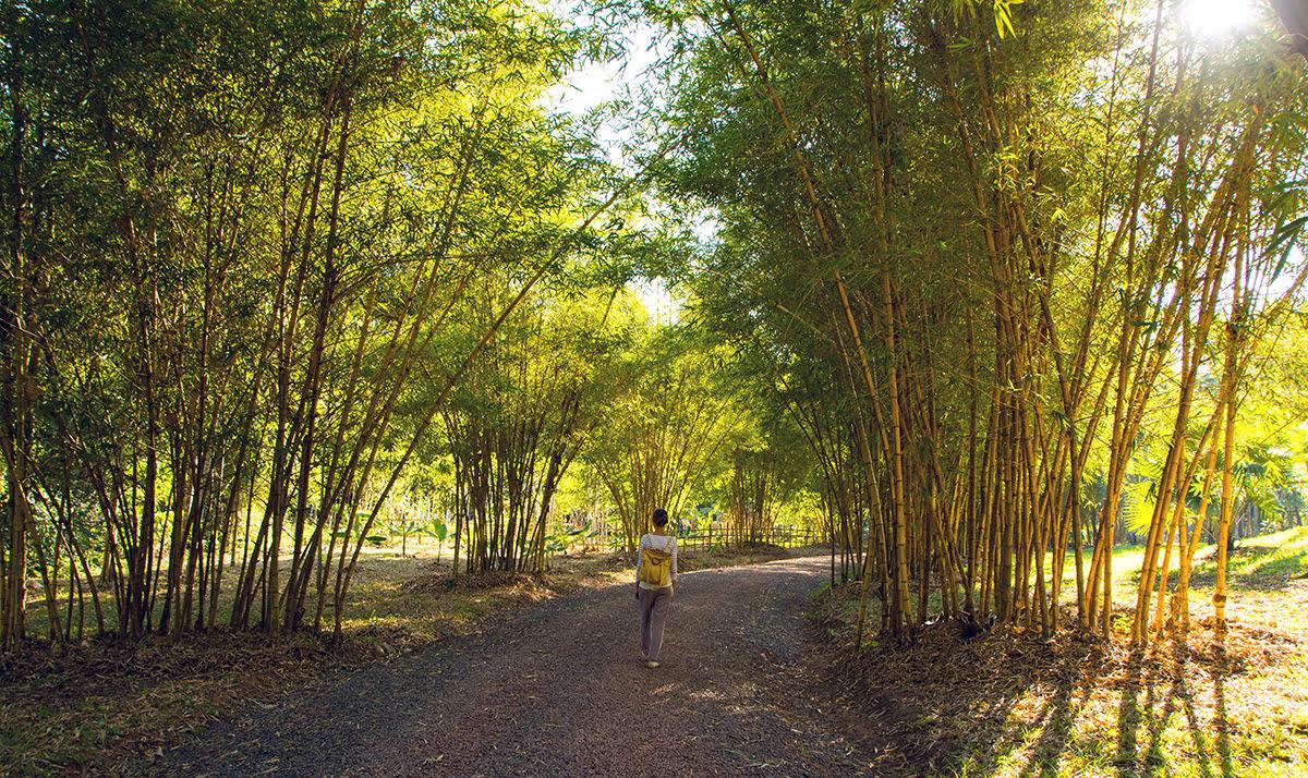 Things to do in Luang Prabang-Laos-Pha Tad Ke Botanical Garden