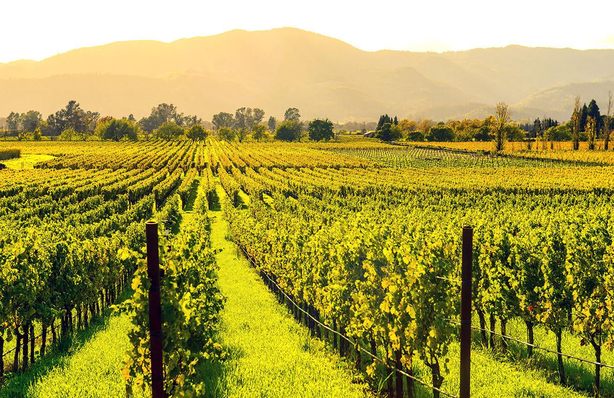 Wine tasting tours-vineyards-wineries-Napa Valley
