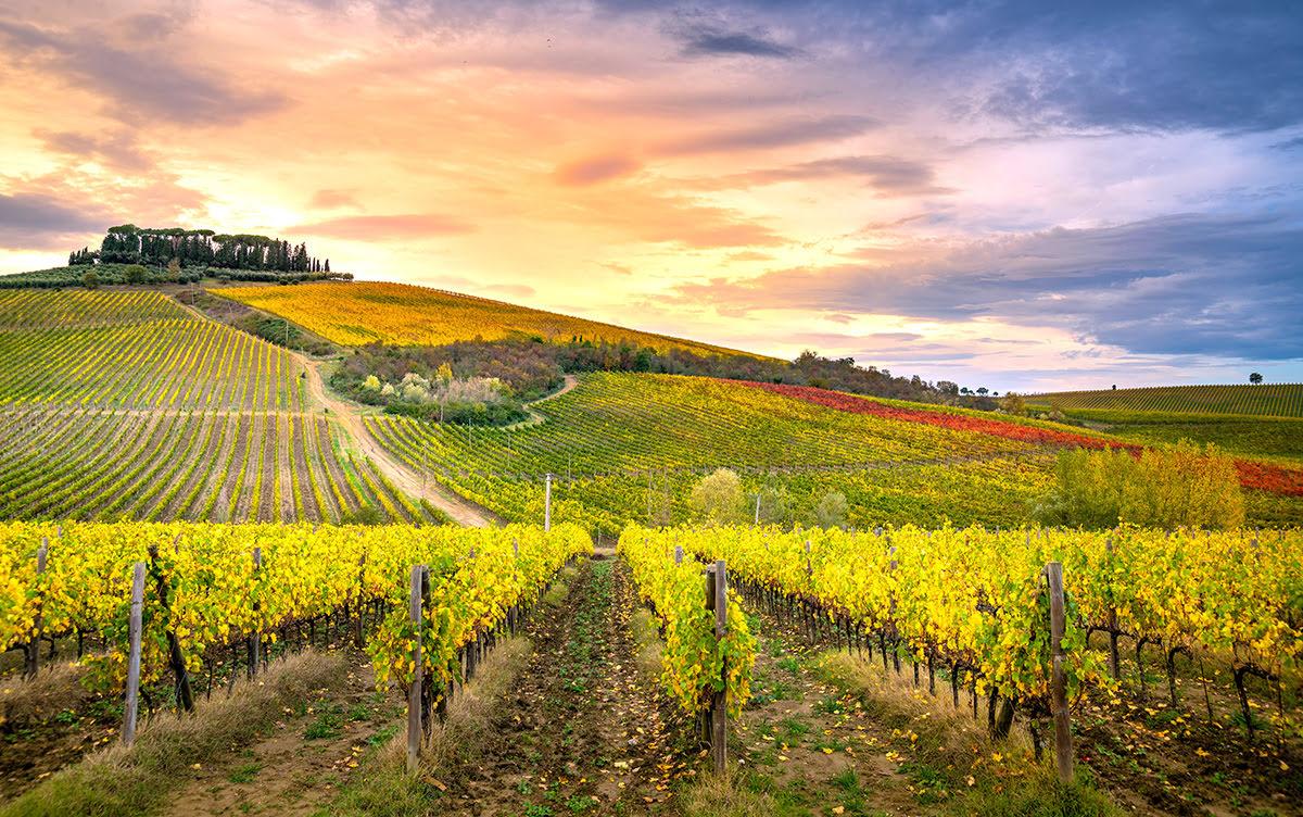 Wine tasting tours-vineyards-wineries-Tuscany