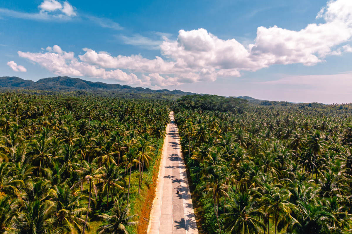 Things to do in Siargao Island-Palm tree road