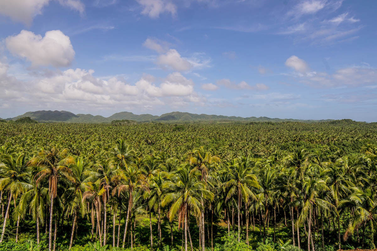 Things to do in Siargao Island-Sea of Palms viewpoint