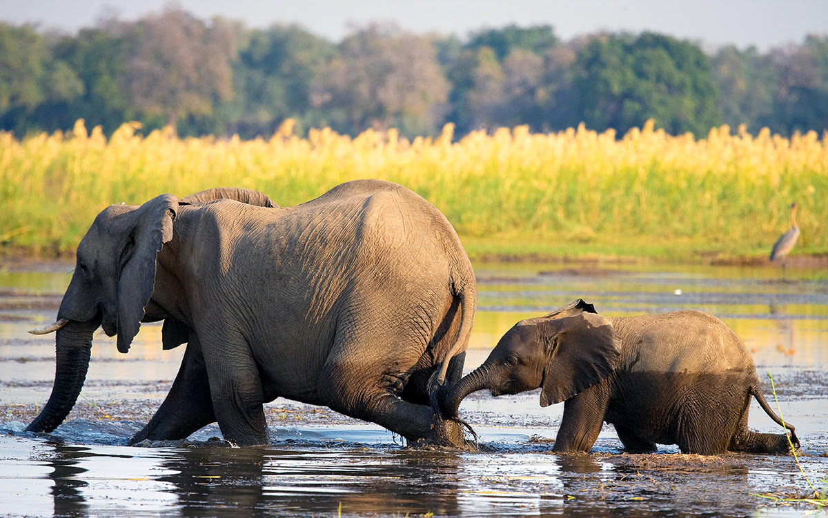 Places to visit in Zambia-Africa-Lower Zambezi National Park