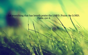 Let everything that has breath praise the Lord! Hallelujah! Praise the Lord!