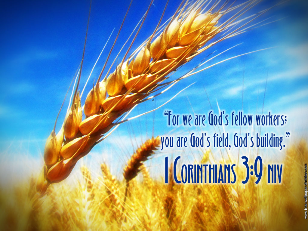 Image result for 1 corinthians 3:12