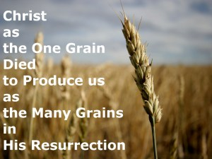 Christ as the One Grain Died to Produce us as the Many Grains in His Resurrection