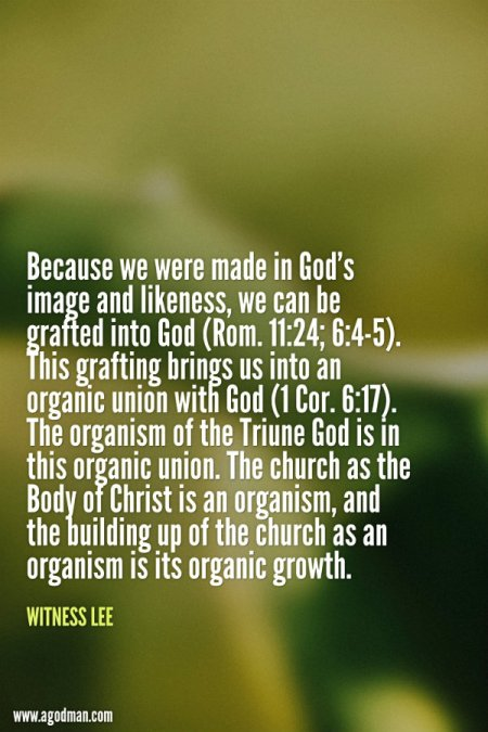 Because we were made in God's image and likeness, we can be grafted into God (Rom. 11:24; 6:4-5). This grafting brings us into an organic union with God (1 Cor. 6:17). The organism of the Triune God is in this organic union. The church as the Body of Christ is an organism, and the building up of the church as an organism is its organic growth. Witness Lee