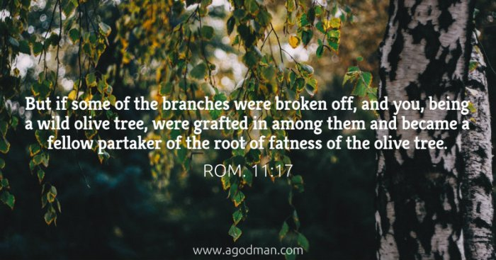 Rom. 11:17 But if some of the branches were broken off, and you, being a wild olive tree, were grafted in among them and became a fellow partaker of the root of fatness of the olive tree.