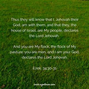 Experiencing the Lord's Shepherding for the Recovery of the Church Life (Ezek. 34)