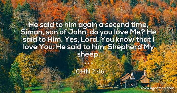 John 21:16 He said to him again a second time, Simon, son of John, do you love Me? He said to Him, Yes, Lord, You know that I love You. He said to him, Shepherd My sheep.