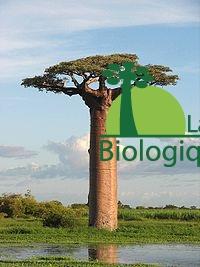 baobab-abaobab-1