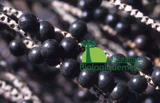 Les baies d'açaï bio