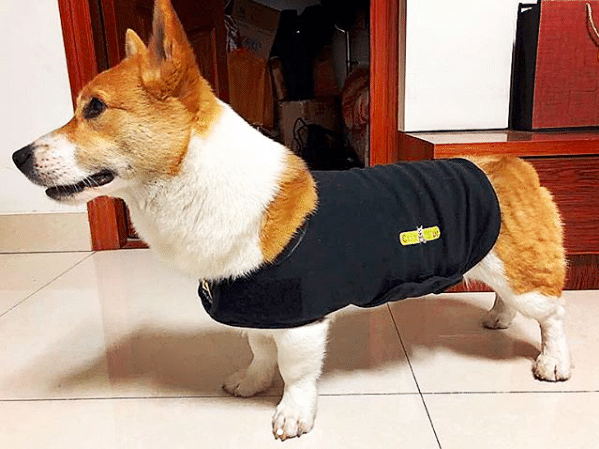 CozyFur Dog Anxiety Vest With Relaxing Music & Essential Oils