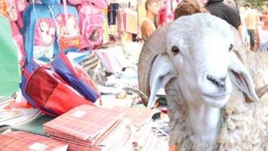 Photo of عيد الأضحى تشكل ما يقرب من 29 % من الإنفاق الشهري العام للأسرة المغربية