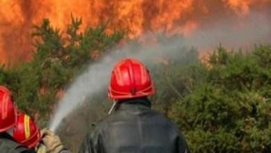 Photo of شفشاون : إخماد حريق غابوي أتى على نحو 7 هكتارات