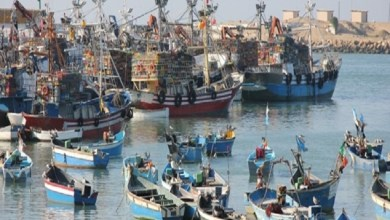 Photo of ارتفاع الكميات المفرغة من منتجات الصيد الساحلي والتقليدي بـ11% متم أكتوبر