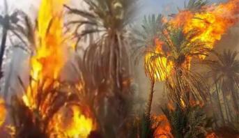 Photo of فيديو: نفوق المواشي وتلف أشجار النخيل في حريق مهول بواحة اسا