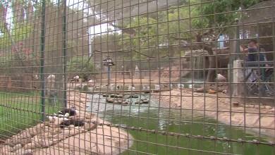 Photo of إعادة تأهيل حديقة وادي الطيور كفيل بتعزيز قوة الجذب السياحي لوجهة أكادير