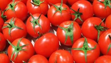 Photo of أطباء يحددون الأشخاص الذين يجب ألا يتناولوا الطماطم