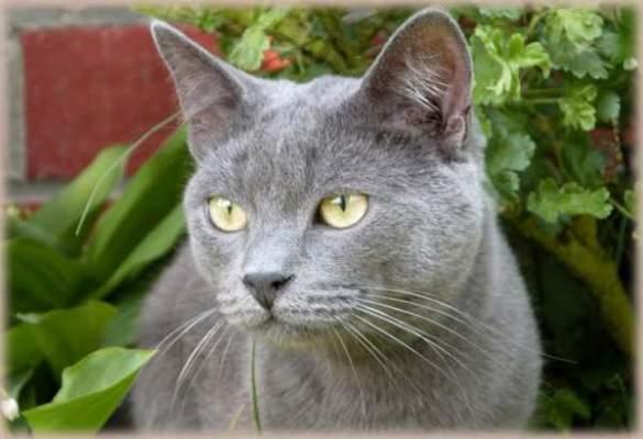 Photo of قطة روسية هائجة تنتقم من عائلة أميركية