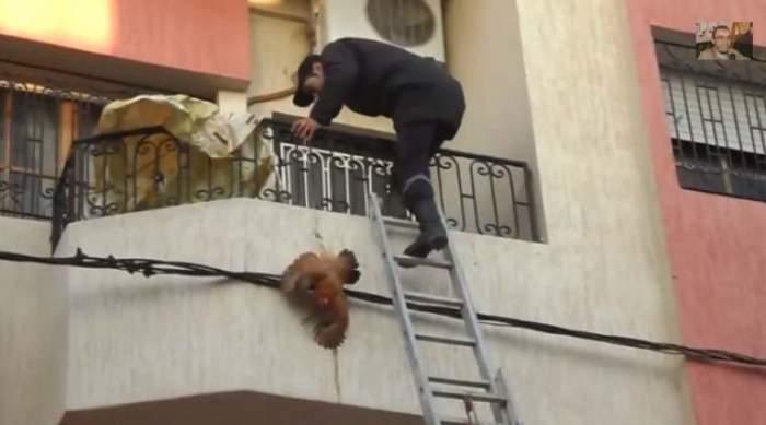 Photo of عملية إنقاذ دجاجة مغربية على الطريقة الأمريكية