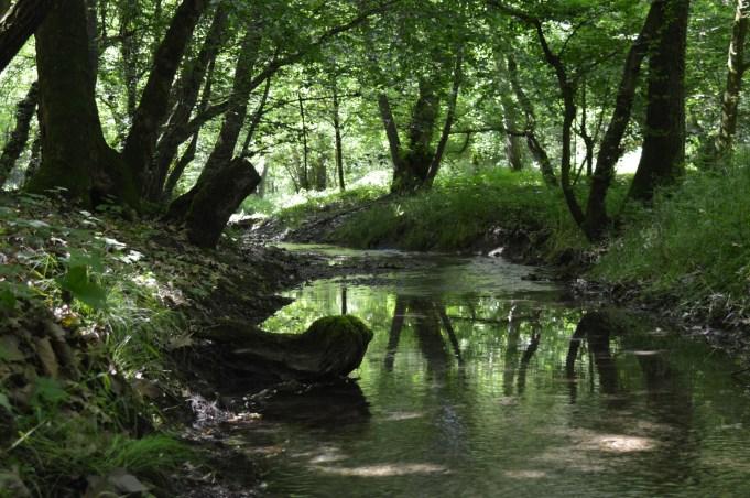 Un torrente immerso nel verde - Sara Pompa