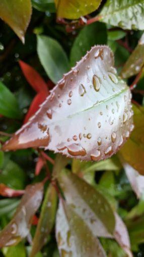 Lieve carezza dell'acqua sulle foglie - Stefano Carboni
