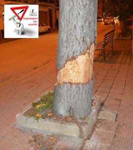 atti vandalici albero 2
