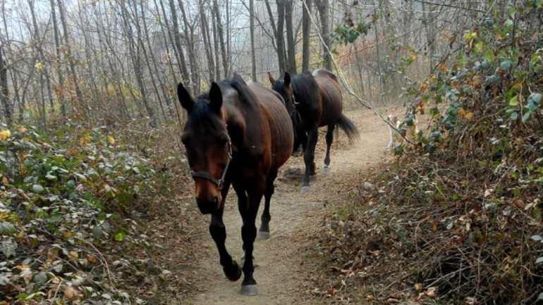 Provincia di Roma. Caramonica:Furti di cavalli, preoccupante escalation