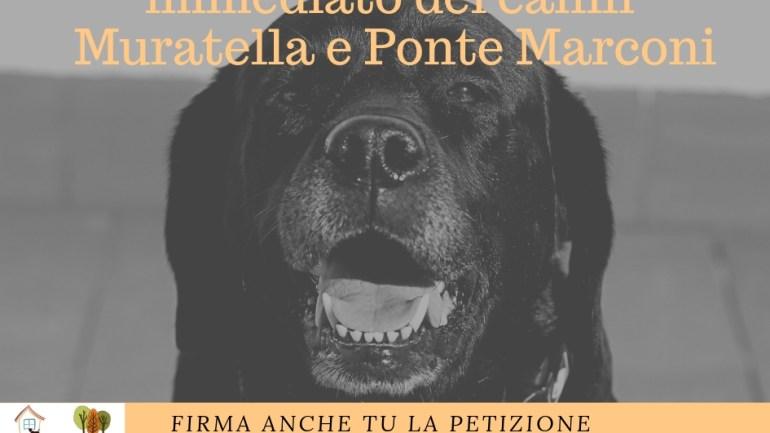Roma. Petizione in favore del canile della Muratella