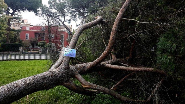 """Latina. Valiani (Lega): """"L'ambiente si rispetta anche avendo cura dei nostri alberi"""""""