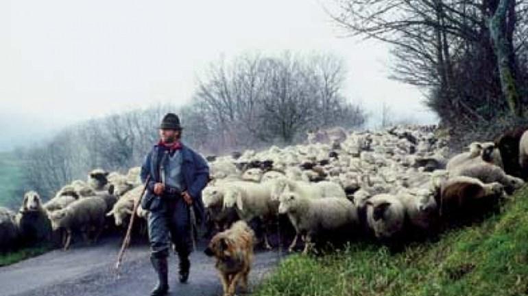 Regione Lazio. Agricoltura: 180 mila euro per promozione transumanza