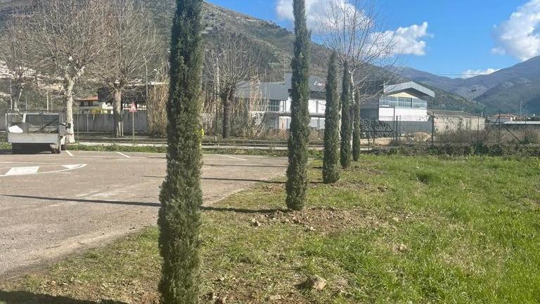 Un boschetto di cipressi in memoria delle vittime del Covid al cimitero di Fondi