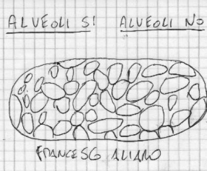 alveoli si o alveoli no