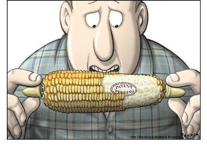 patent_corn