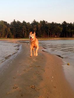 Top 5 Lessons I Learned From My Dog