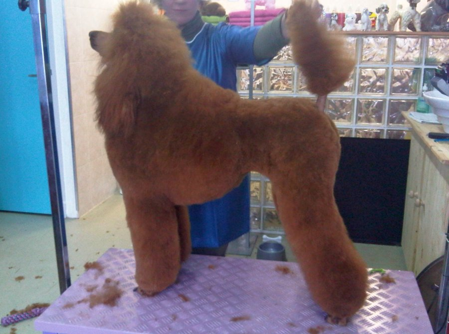 de-honden-van-agouti-2