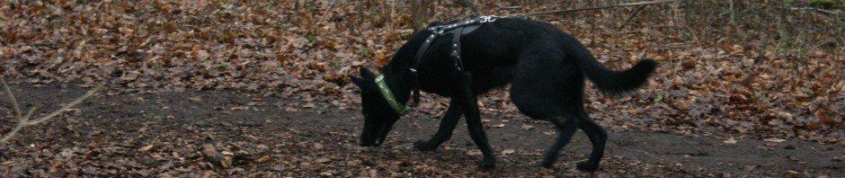 herder-uitlaten-hondenschool-purmerend