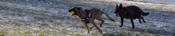 hondenschool-agouti-purmerend