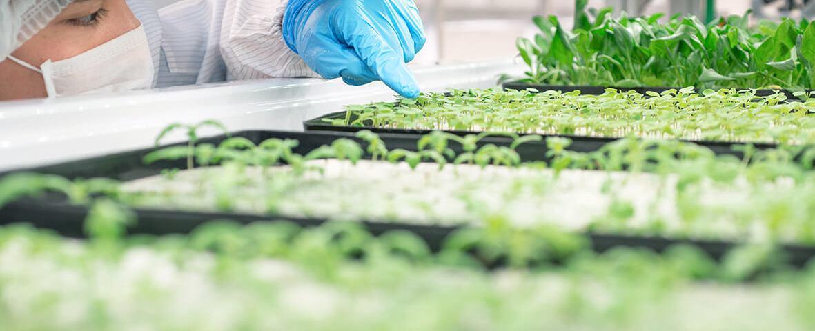 Biotecnologie agrarie: direttiva Ue del 2001 superata, serve un nuovo quadro giuridico